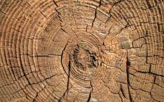 Лестницы из бука: свойства древесины, фото и другое