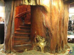 Ступеньки в толще дерева каури